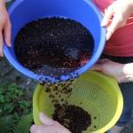 Holundersirup - Anleitung - Wasser abgiessen